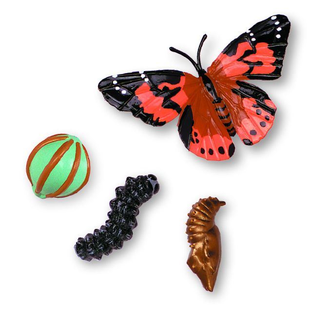 Drugelių auginimo sodas su 3-5 drugeliais