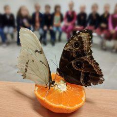"""Edukacija vaikams """"Gyvi tropiniai drugeliai iš arti"""""""