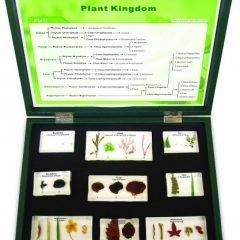 Augalų, grybų ir dumblių karalystė. Lagaminas su mokslinių egzempliorių rinkiniu